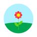 Blossom-Plan 256